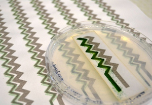 The bio-solar panel could resemble wallpaper but is in fact an environmental sensor for