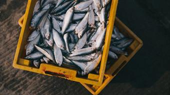Can lab grown seafood relieve the negative environmental impacts of wild fishing?