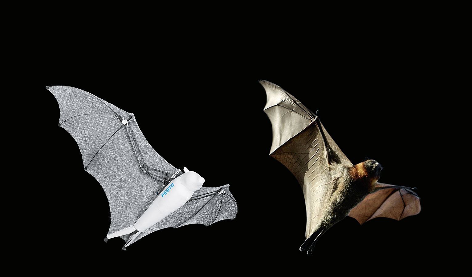 BionicFlyingFox compared to real flying fox. Source: Festo