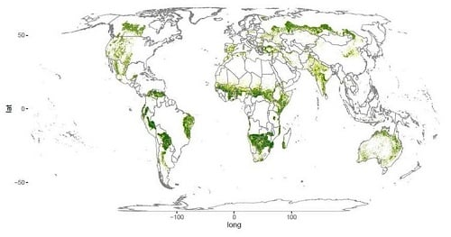 The world's drylands: forested areas shown in green; non-forested areas in yellow. Source: Bastin et al., Science (2017)