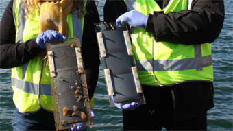 Video: Marine bio-fouling eliminated by electrically charged coating
