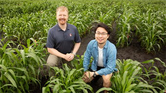 Machine learning tool helps create drought-resistant crops