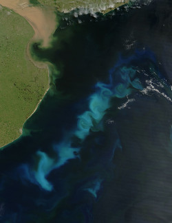 Phytoplankton bloom in the South Atlantic Ocean. Fertilizing the ocean with iron could stimulate blooms that remove carbon dioxide from the atmosphere. Source: NASA
