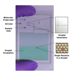 This microfluidic lab-on-chip, designed at Johns Hopkins University, can detect bacteria in pico liter-size droplets. Image source: Jeff Wang, JHU.