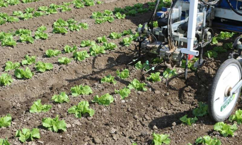 This robotic weeder is operating in a field near Santa Maria, CA in June 2015. The field is full of a specialty crop. Source: Steven Fennimore