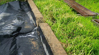 Reining In Agri Runoff Pollutants with Rice