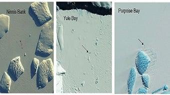 Satellite sensors identify new penguin colonies by the presence of poop
