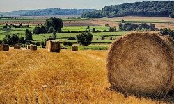 Leftover straw from wheat harvests could be the building blocks for greener chemicals. Source: Pixabay/ArnoBeauvois