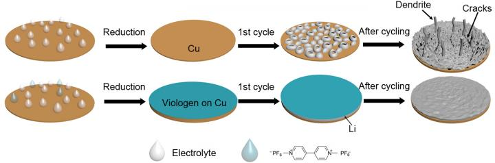 These are illustrations of the design principles of using methyl viologen to form a stable coating to allow the stable cycling of lithium metal. Image credit: UC Riverside