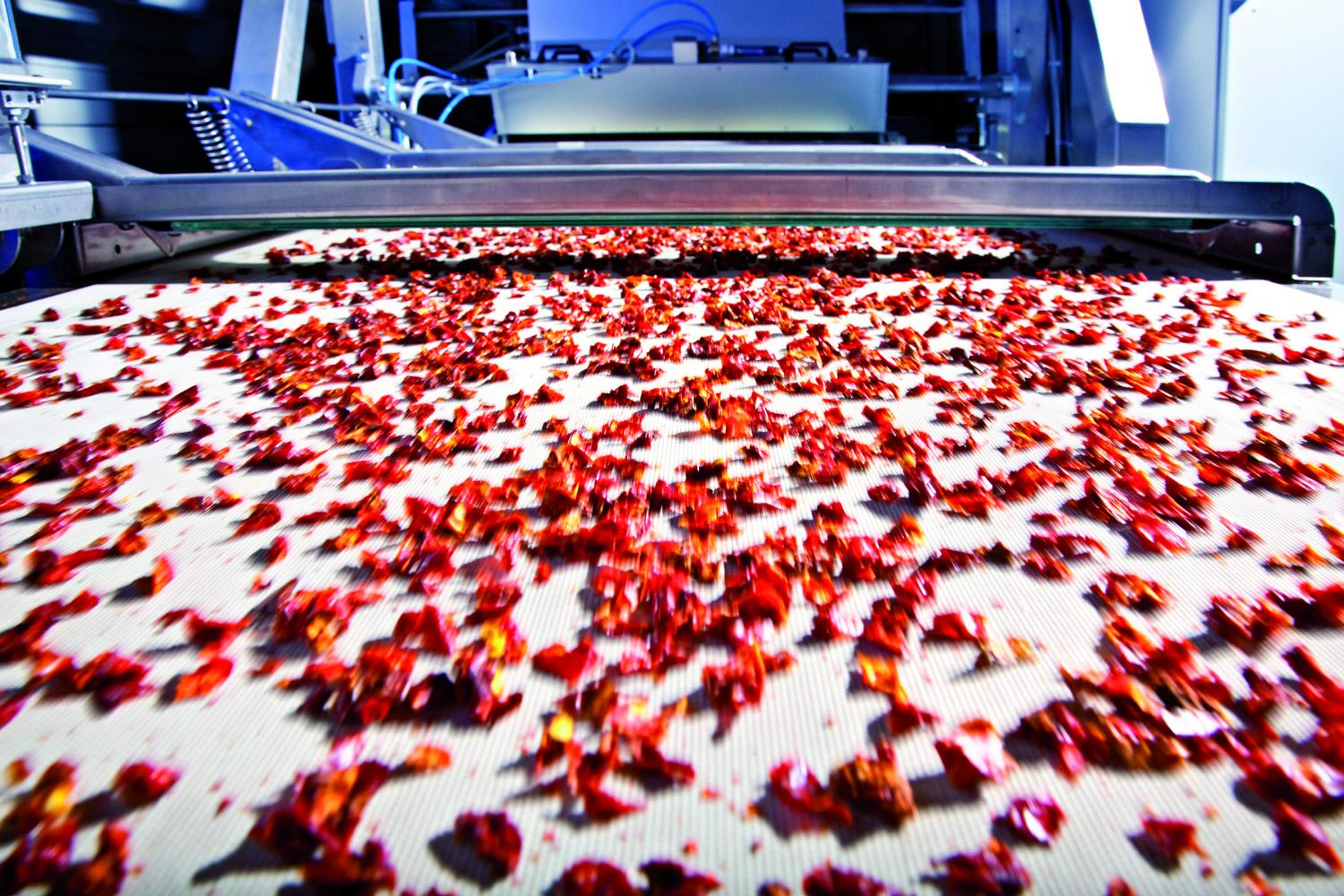 Dried fruit, gravel or waste—all of it is sorted on belt systems by size and quality. Image credit: Fraunhofer IOSB