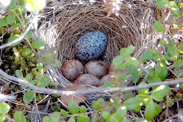 an analysis of the story the cuckoos egg The point of view toshio mori uses in this story is peripheral first person  the cuckoo's egg book analysis – tracking a spy suma lakshminarayan .