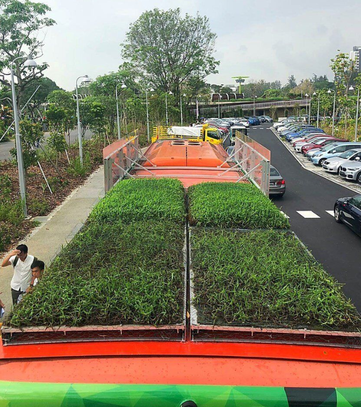 Buses in Singapore outfitted with rooftop gardens to lower