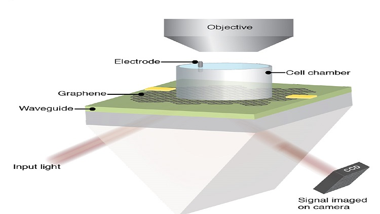 Video: Graphene sensor images electrical activity of beating heart