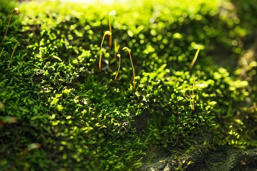 Researchers have determined how moss and algae protect themselves from too much sunlight. Image credit: MIT