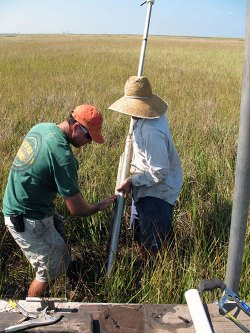 USGS scientists studying subsidence extract a core sample from marshland in southern Louisiana. Image source: USGS